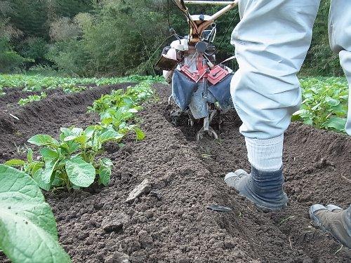 ジャガイモ中耕