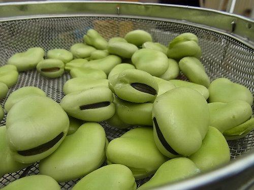 オハグロバッチリ蚕豆