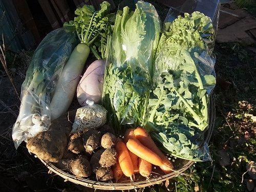 旬の有機野菜セット定期便 2014年1月20日