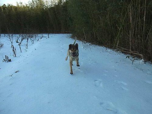 犬は喜び、畑駆け回る