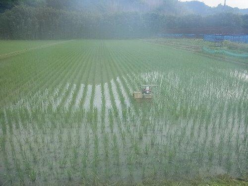 田の草取り 動力除草機