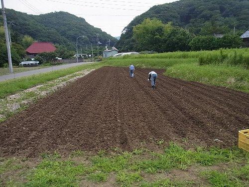 黒大豆と小豆播種