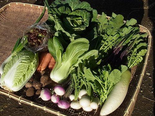 旬の有機野菜セット定期便2015年2月6日