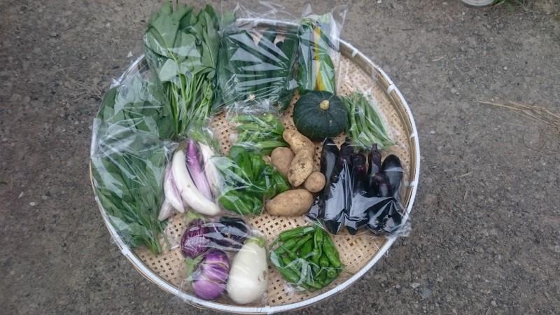 旬の有機野菜セット定期便