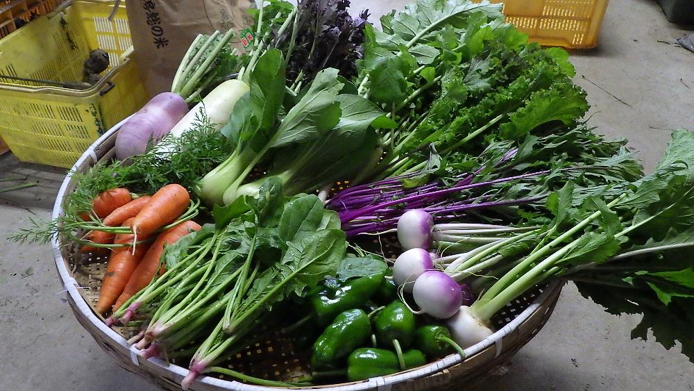 旬の有機野菜セット定期便 2015年11月19日