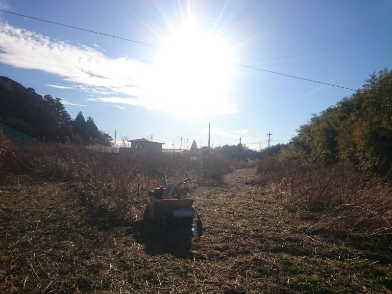 新しく借りた畑