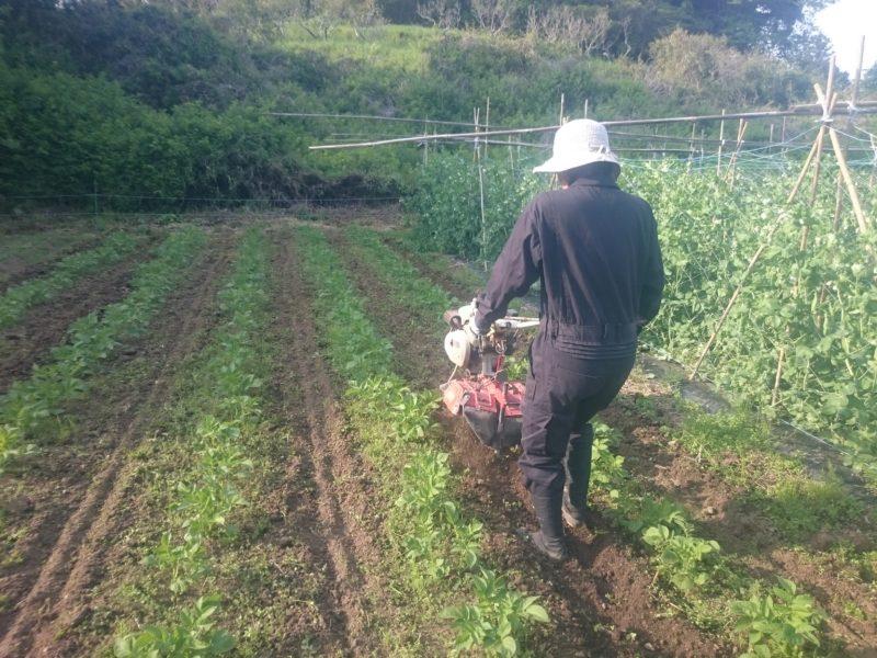 ジャガイモ中耕 土寄せ