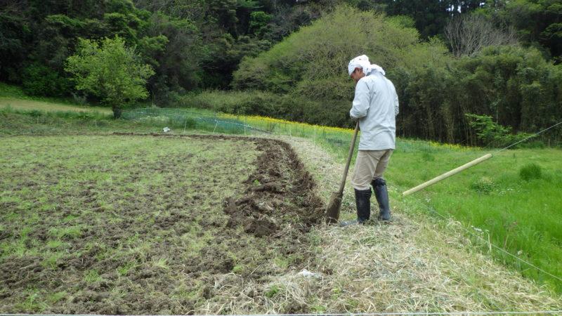 くろ切り 畦を切って元畦を出します