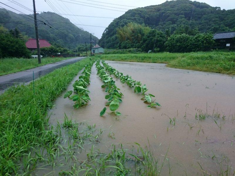 大雨で畑冠水