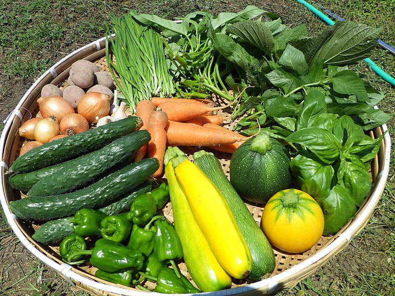旬の有機野菜セット定期便 2016年7月15日