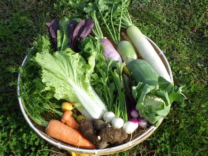 旬の有機野菜セット定期便2016年12月5日