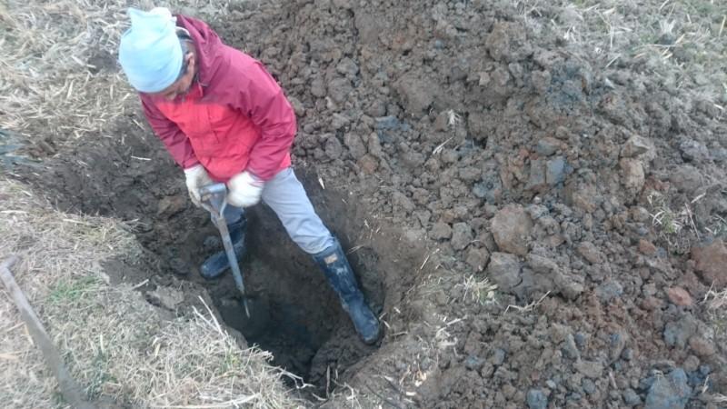田んぼに穴掘ってます