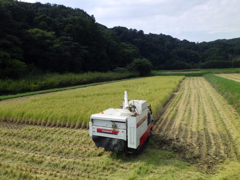 稲刈りスタート