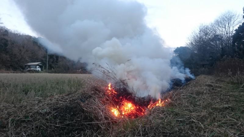 畦草燃やし
