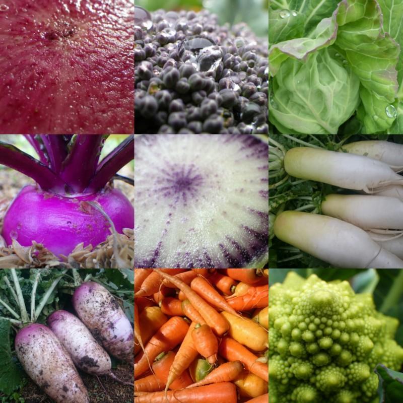 冬の美しい野菜たち