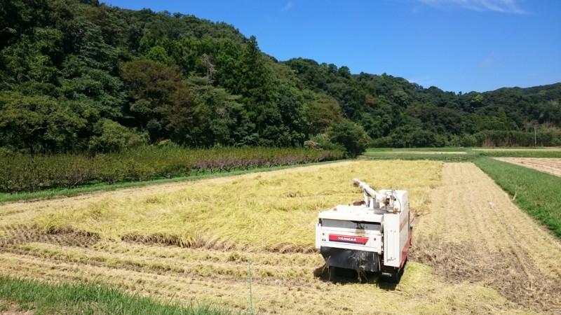 順調に進む稲刈り
