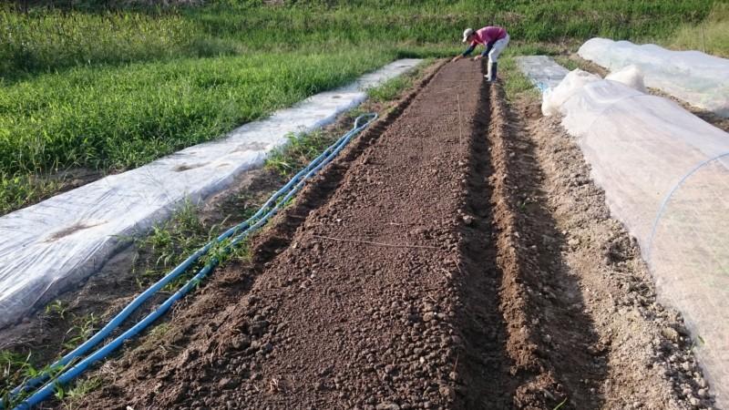 苗床に播種