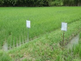 無農薬米の看板設置