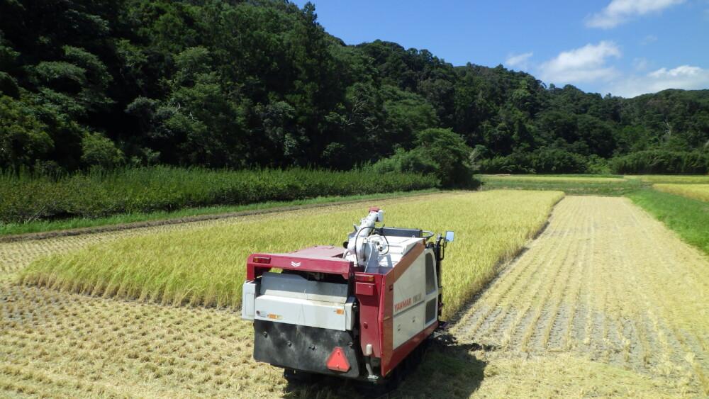 稲刈り進行中